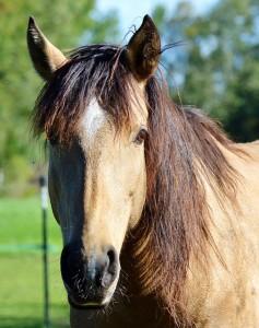 horse-2977240_640
